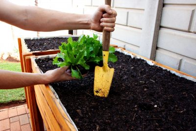 Fresh Timber outdoor wooden herb planter box with spade